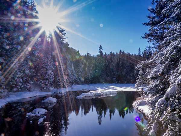 Winter scene in Algonquin Park