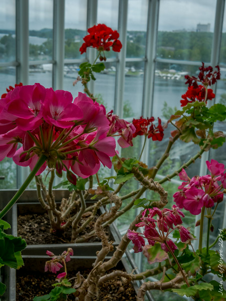 Flowers overlooking the lake in Science North